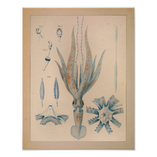 1851 Vintage Color Squid Print