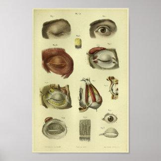 1866 Human Eye Anatomy Print
