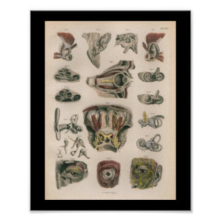 1879 Vintage Bock Anatomy Print Eye Ear