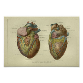 1886 Vintage Human Heart Anatomy Print
