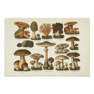 1894 Mushrooms Variety Fungus Print in German