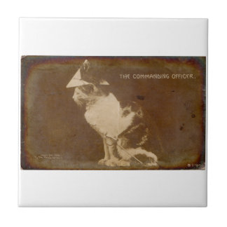 1906 The Commanding Officer dressed cat RPPC Tile