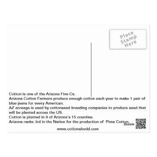 1912 Arizona Cotton Fact Postcard