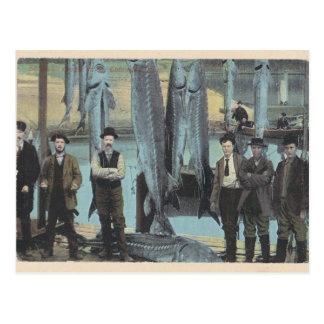 1914 Sturgeon Postcard - Sturgeon Catch