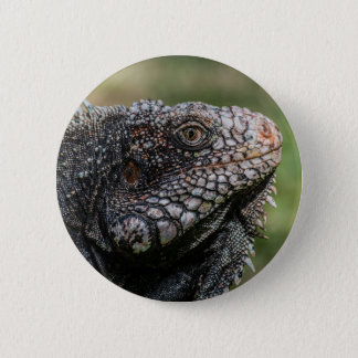 1920px-Iguanidae_head_from_Venezuela 6 Cm Round Badge