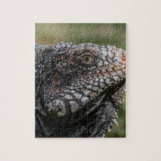 1920px-Iguanidae_head_from_Venezuela Jigsaw Puzzle