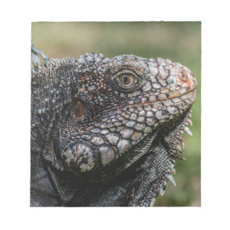 1920px-Iguanidae_head_from_Venezuela Notepad