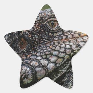 1920px-Iguanidae_head_from_Venezuela Star Sticker