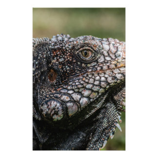 1920px-Iguanidae_head_from_Venezuela Stationery