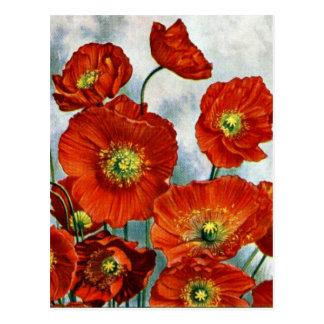 1922 Iceland Poppy Illustration Postcard