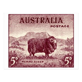 1934 Australian Merino Sheep Postcard