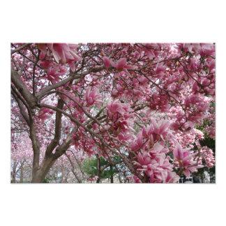 "19""x13"" Large Pink Magnolia Photograph"
