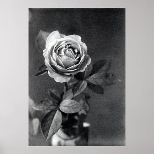 19th C. Rose Poster