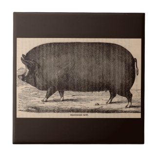 19th century farm animal print Berkshire sow pig Ceramic Tile