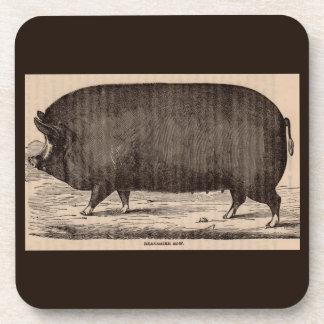 19th century farm animal print Berkshire sow pig Coaster