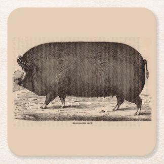 19th century farm animal print Berkshire sow pig Square Paper Coaster
