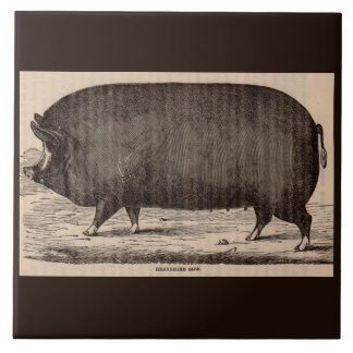 19th century farm animal print Berkshire sow pig Tile