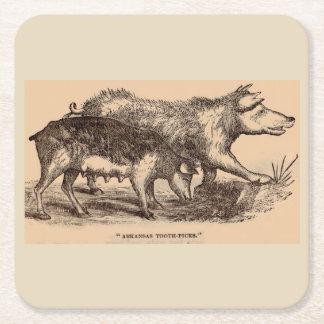 19th century farm animal print pigs square paper coaster