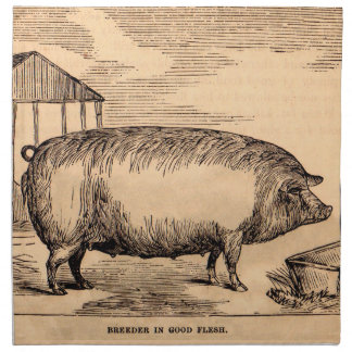 19th century pig print 'Breeder in Good Flesh' Napkin