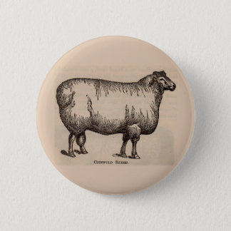 19th century print Cotswold sheep 6 Cm Round Badge