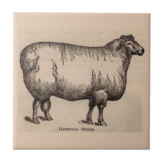 19th century print Cotswold sheep Tile