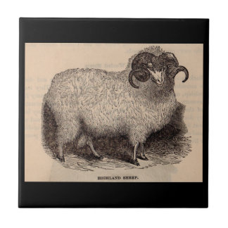 19th century print Highland sheep Ceramic Tile