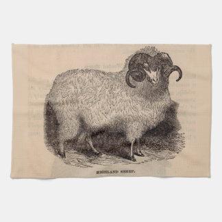 19th century print Highland sheep Tea Towel