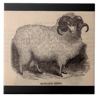 19th century print Highland sheep Tile