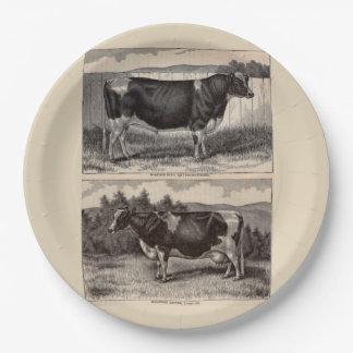 19th century print Holstein bull and heifer Paper Plate