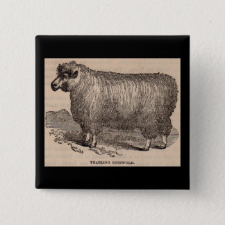 19th century print yearling Cotswold sheep 15 Cm Square Badge