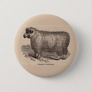 19th century print yearling Cotswold sheep 6 Cm Round Badge