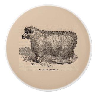 19th century print yearling Cotswold sheep Ceramic Knob
