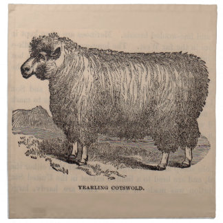19th century print yearling Cotswold sheep Napkin