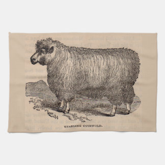 19th century print yearling Cotswold sheep Tea Towel