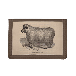 19th century print yearling Cotswold sheep Tri-fold Wallets