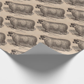 19th century print yearling Cotswold sheep Wrapping Paper