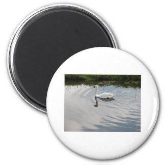 1 swan magnets