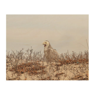 1x8 Snowy owl sitting on the beach Wood Wall Decor
