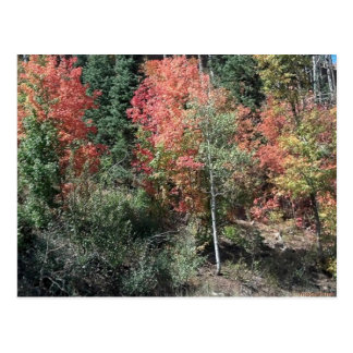 2012 autumn leafs post card postcard