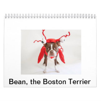2015 Boston Terrier Calendar