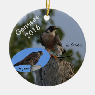 2016 Genesee Ornament - in adult plumage.