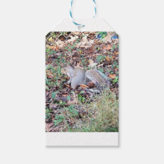 20171204_092143 GIFT TAGS