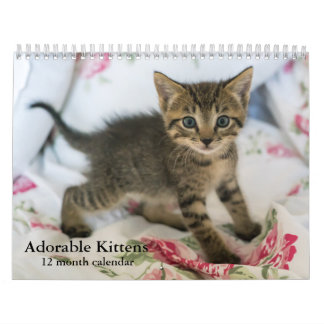 2018 Adorable Kittens Twelve Month Cat Wall Calendar