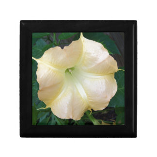 202a Angels trumpet  golden close up Gift Box