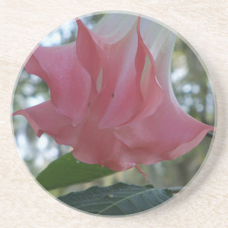 205a Angels trumpet pink close Coaster