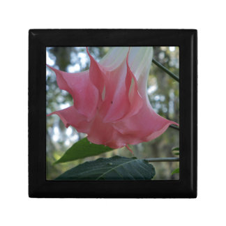205a Angels trumpet pink close Gift Box