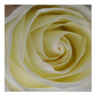 "20""x20"" Yellow Rose Poster Print"