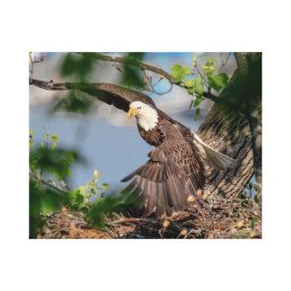 20x16 Bald Eagle leaving the nest Canvas Print