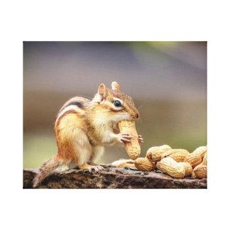 20x16 Chipmunk eating a peanut Canvas Print
