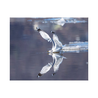 20x16 Gull Reflections Canvas Print